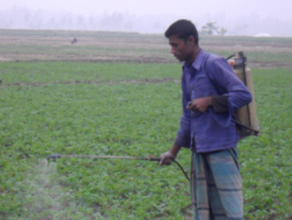 NOT GREEN  Banned pesticides are given the hard sell in Bangladesh, killing thousands each year.
